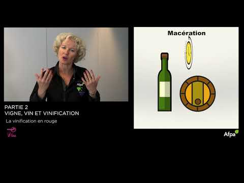 UA2 - Video 5  - La vinification en rouge