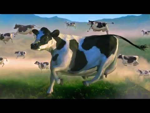 FUNNY COW DANCE 5 │ Cow Song & Cow Videos 2021
