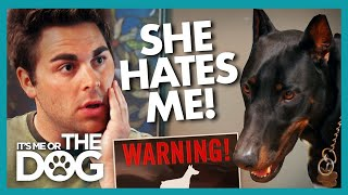 Daisy the Doberman HATES This Guy | It's Me or The Dog