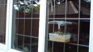 Window Bird Feeder And Mealworm Crumble Attract A Robin