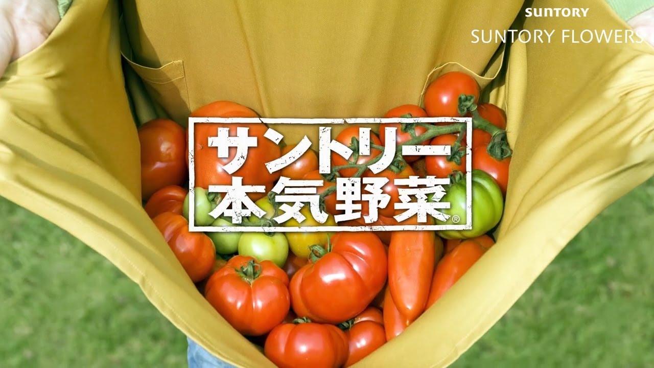「サントリー本気野菜」ブランドストーリー 1分20秒