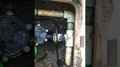 Turkistan Cockroaches in Irrigation box Maricopa Arizona