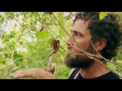 Discovery: Дикая кухня/ 1 сезон, 4 серия