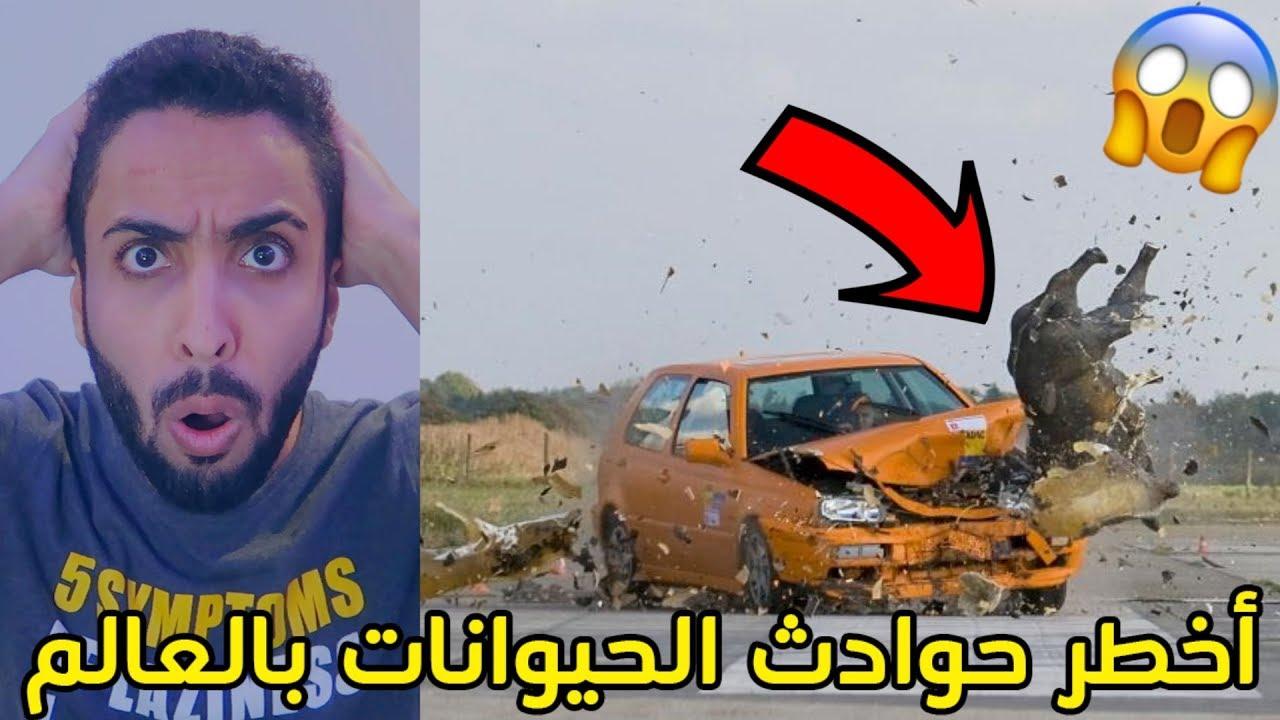 أخطر حوادث الحيوانات بالعالم/هجوم كلب على سيارة الشرطه!!!+18