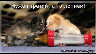 Смешные картинки про кошек и котят Выпуск №66  FUNNY CATS СМЕШНЫЕ КОШКИ