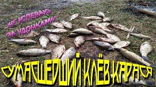 Рыбалка на карася, клюет на все, бешеный клев, убийца карася работает (Каширское 2019)