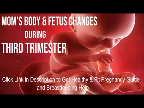 what-happens-to-a-woman's-body-&-fetus-during-the-third-trimester?
