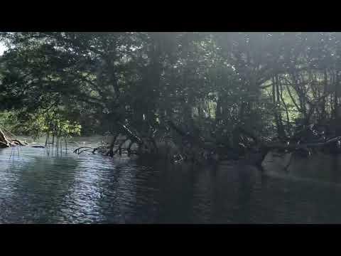 Мангровые заросли. Доминиканская республика. Национальный парк Лос-Айтисес