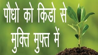 Any Plant Care Free Gardening Sekho    NOT- [seeds link below in description]