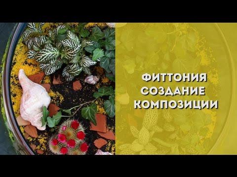 Доставка цветов и букетов Хабаровск, цветочный салон и