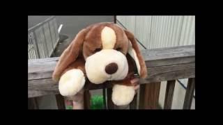 AP Deutsch Video Project - Scooby Doo