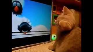 Смешные Кошки!  'Улыбнись   3'   ТВ