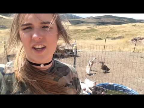 Karaoke and farm animals!