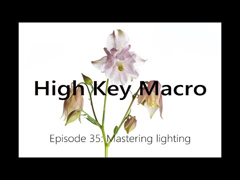 How To Do High Key Macro -  Mastering Light With Simple Equipment