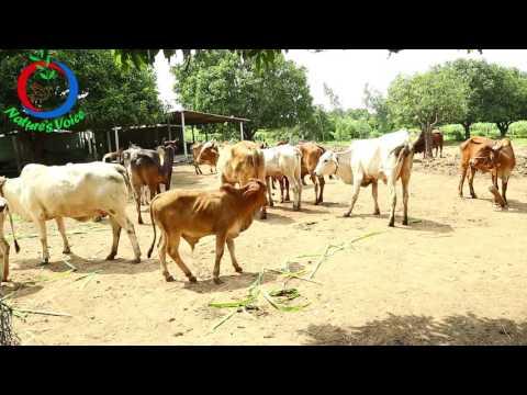 ZBNF | Ecological Farming Through ZBNF| Sharath Pendekanti-7
