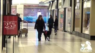 Service Dogs In Public