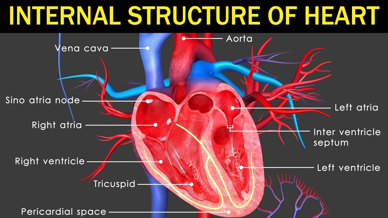 State Board | 10th Class Biology | Biology - Internal ...
