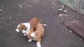 Making babydogs