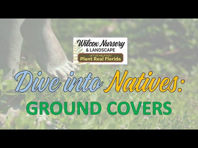 Dive into Natives: Ground covers
