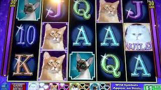 Kitty Glitter $1 Bonus Game