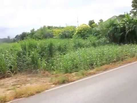 ขายที่ดิน 4 ไร่ อ ท่ามะกา ติดถนน ติดชุมชน ทำเลดี