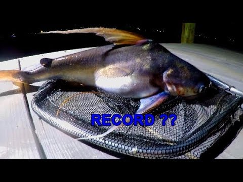 I CAUGHT A POSSIBLE RECORD SALTWATER CATFISH!!??