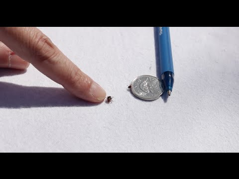 how-to-tell-the-difference-between-ticks