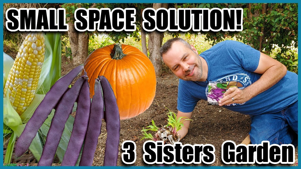 Download Planting a 3 Sisters Garden /  How to Grow Corn,  How to Grow Squash, How to Grow Beans... Together!