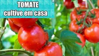 Plante Tomates em Vasos sem Agrotóxicos
