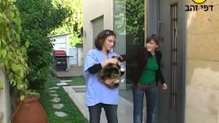 видео  ветеринар на дом