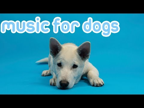 Deep Separation Anxiety Music to Relax Your Dog! Helped 10 Million Dogs!