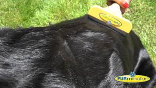 Anti-Haaren Feuchttücher für Hunde