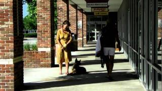German Shepherd Mahogany 7 mons Dogtra e collar