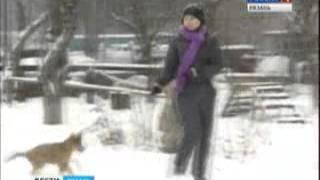 В Рязани собак будут выгуливать по правилам