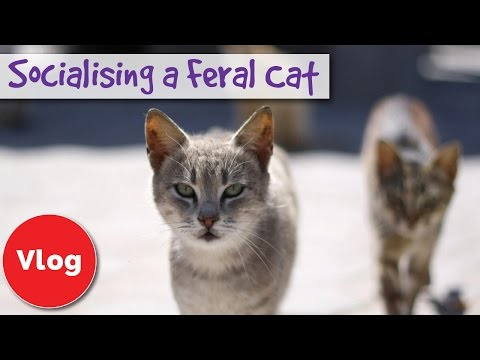 How To Socialise A Feral Or Stray Cat Tips To Help Turn A Feral