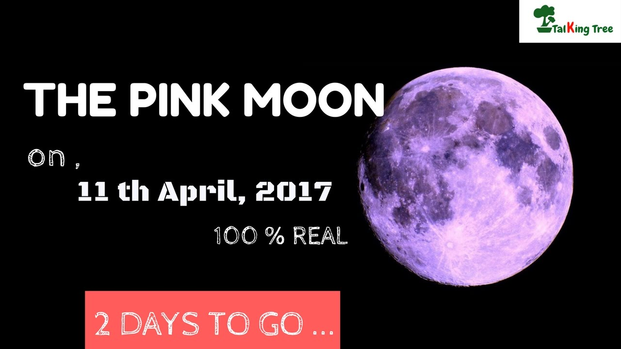 Pink Moon 2017 The Pink Moon 11th April 2017 Don T Miss