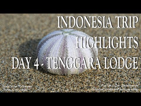 Indonesia Travel Highlights - Day 4 - Morning Surf, Beach Hike, Meeting Local Kids