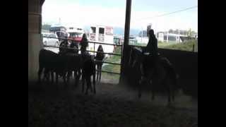 Laurence et Wacho - Stage bétail 28.10.2012