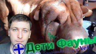 Укусила собака собаку, что делать? Советы ветеринара(Уличная собака или кошка напала на вашу собаку, что делать? В ролике рассказываю о случае во время которого..., 2016-03-12T15:23:35.000Z)