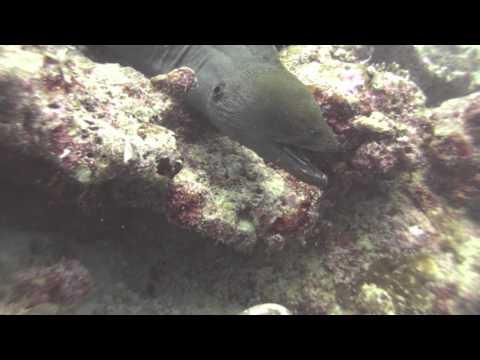 Underwater Dental Hygienists