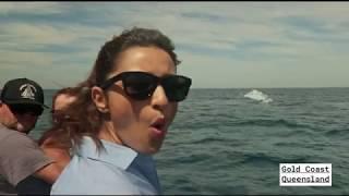 UnDiscover Australia's underwater world