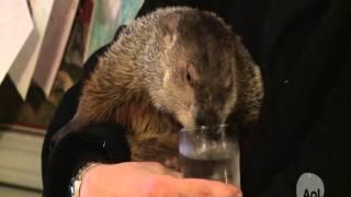 Groundhog Day: The Dark Hog Rises - Punxsutawney Phil