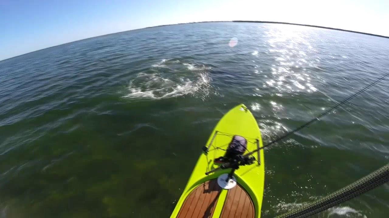 Indian River Seagrass Report - May 2020 Sebastian, FL