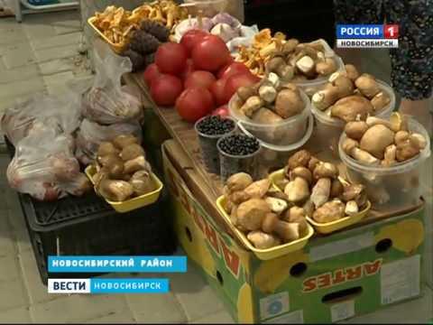 Сезон сбора грибов в разгаре в Новосибирской облас