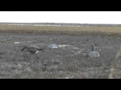 Охота на гусей осенью 2013 г.