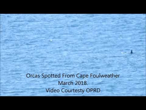 Orca Whales, Central Oregon Coast - Near Depoe Bay on March 18