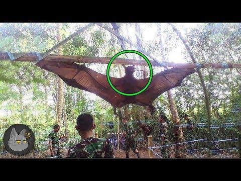 10 Descubrimientos Insólitos A Mitad De La Selva