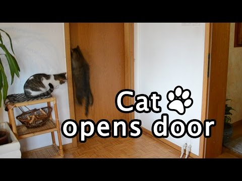 Cat opens door [Compilation]
