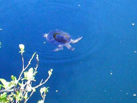 Trou aux tortues - Ouvéa