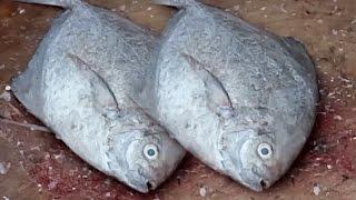 How to Cut a Pomfret Fish | Big Fish Cutting Videos | Live Fresh Water Fishing & Cutting